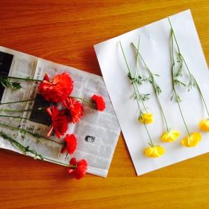 赤と黄色のラナンキュラス