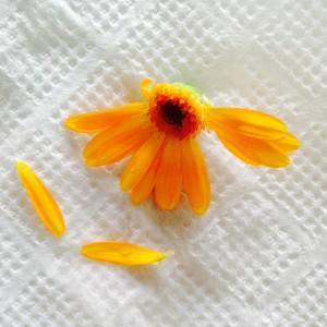 ムラのある花びらの色が趣深い!