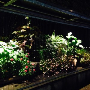 北山植物園の夜