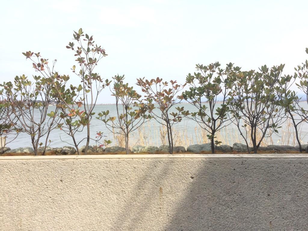 ウッドデッキから柴山潟の眺め